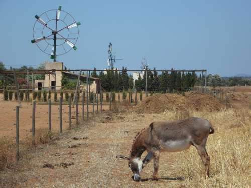 Pinwheel Mallorca Metal Wheel Wind Wind Energy