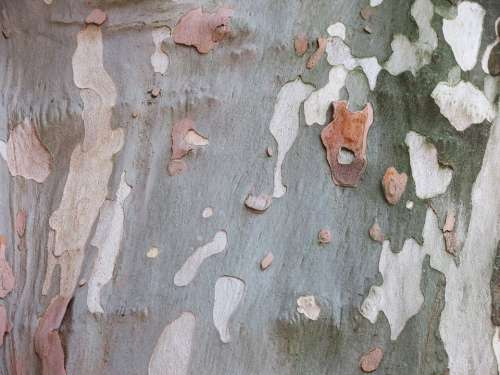 Sycamore Bark Camouflage Pattern Pattern Log Tree
