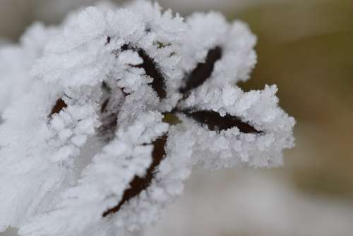 Plant Fog Hoarfrost Autumn Cold Nature
