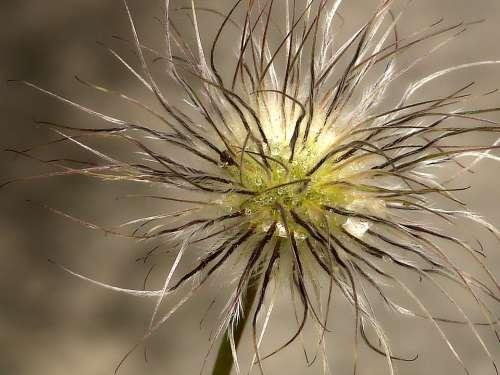 Plant Macro Close Up Blossom Bloom Nature Drip