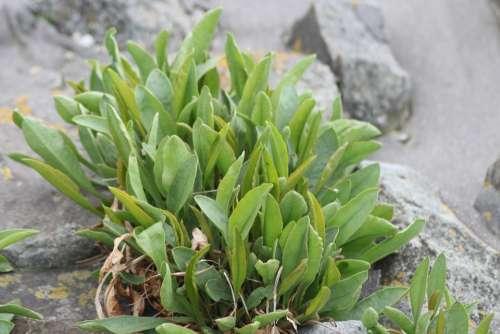 Plant Stones Beach Structures