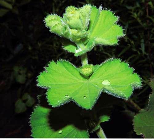 Plant Green Flora Dewdrop Garden Lighting Macro