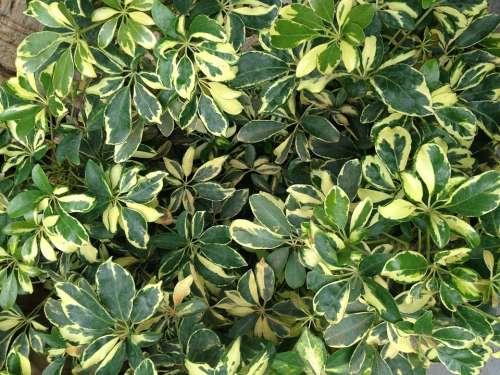 Plant Grass Leaf