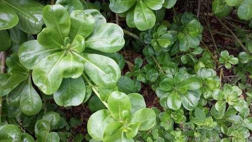 Plant Plants Nature Green Leaf Garden Environment