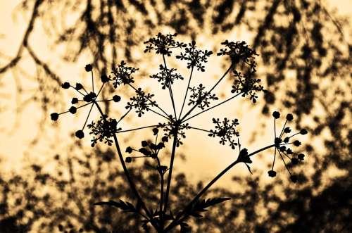 Plant Macro Nature Seasons Spring Summer Sepia
