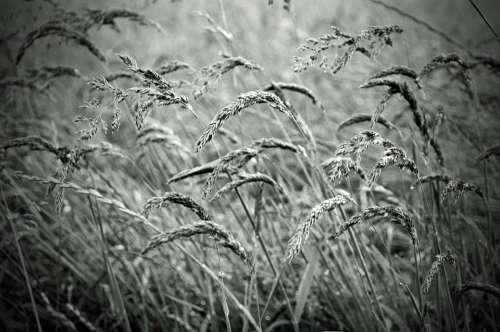 Plant Macro Nature Seasons Black White Spring