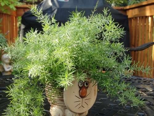 Plant Cat Pot Green Water Rainfall Shimmer