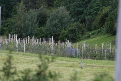 Plantation Wine Wine Hang Winegrowing