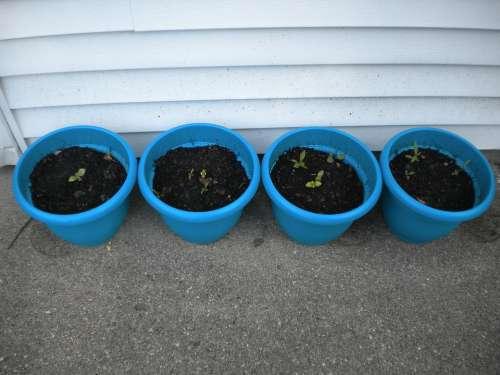 Plants Pots Herbs