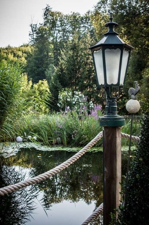 Pond Lamp Teichplanze Plant Garden Pond Trees