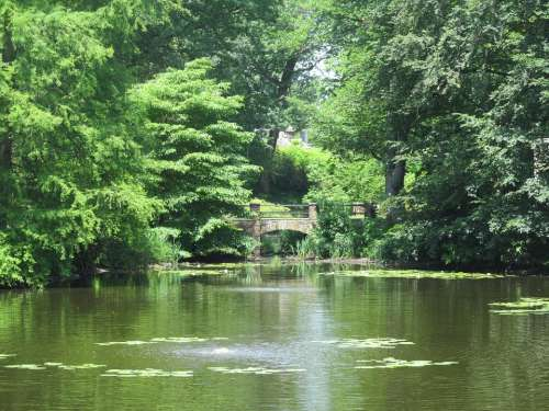 Pond Summer Green Peaceful Nature Outdoor