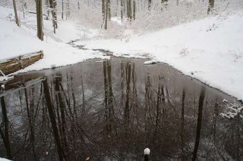 Pond Lake Winter Forest Nature Mirroring
