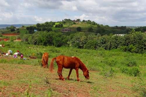 Pony Pack Animal Lambadi Nomads Nomadic Tribe