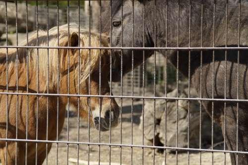 Pony Ponies Fenced Fence Animals Enclosure Cage