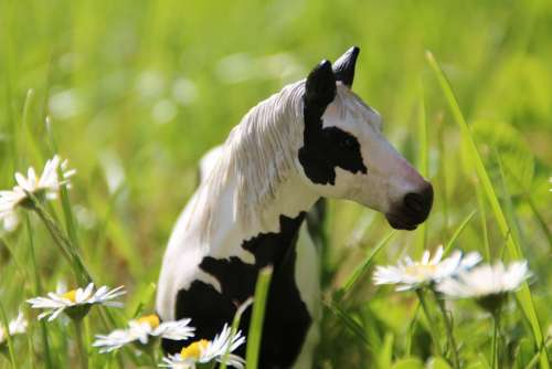 Pony Horse Meadow Landscape Mount Mane Horses