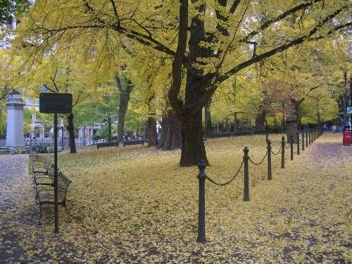 Portland Portland Oregon Scenery Tree Autumn Fall
