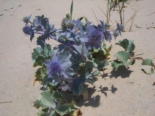 Portugal Algarve Ilia Farol Nature