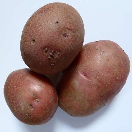 Potatoes Bio Nature Agriculture Vegetables Eat