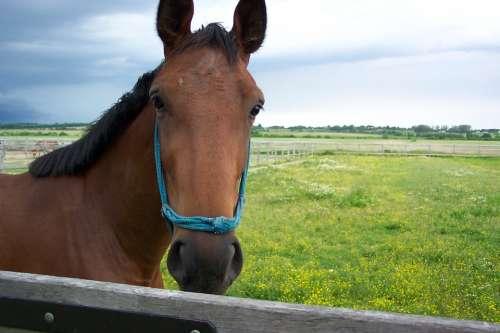 Precious People Hungary Horse Animal Horses