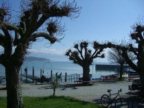 Promenade Friedrichshafen Lake Constance Plane Trees