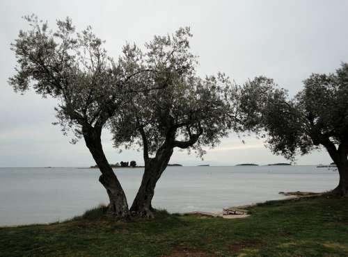 Pula Croatia Beach Mood Sea Spring Clouds Trees