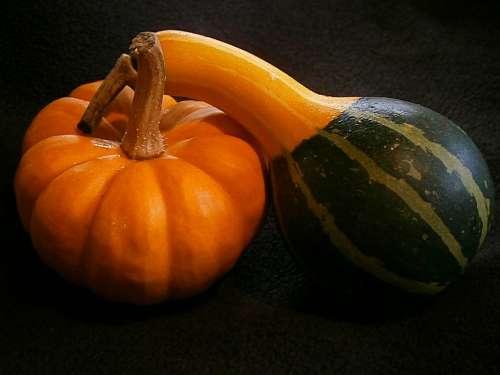 Pumpkin Gourd Mini Pumpkins Miniature Pumpkin