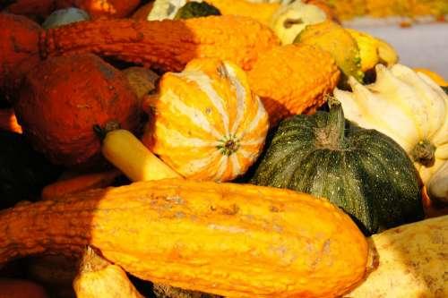 Pumpkin Autumn Halloween Vegetables Harvest