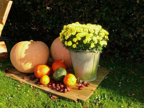 Pumpkin Flowers Plant Autumn Colorful Golden