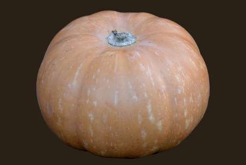 Pumpkin Vegetable Orange