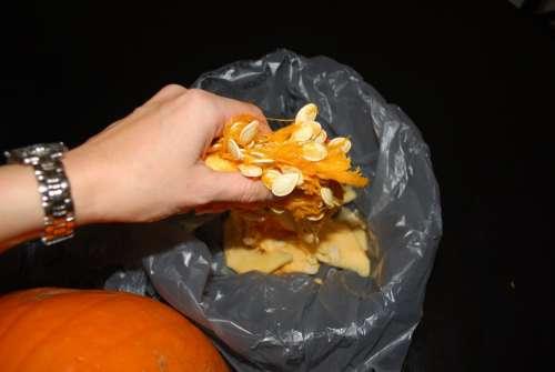 Pumpkin Seeds Rubbish