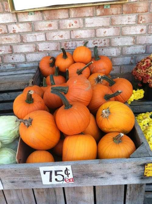Pumpkins Fall Autumn Orange Halloween Food