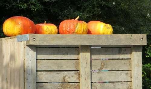 Pumpkins Autumn Fruits Season Color Autumn Colours