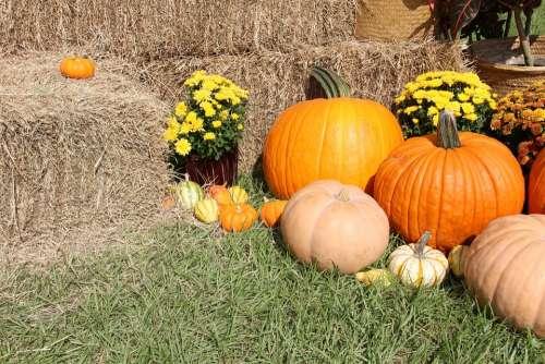 Pumpkins Gourds Fall Halloween Thanksgiving