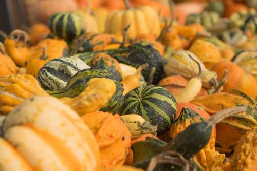 Pumpkins Autumn Orange Yellow Gourd Decoration