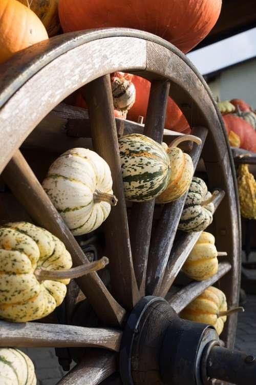 Pumpkins Autumn Orange Yellow Gourd Decoration