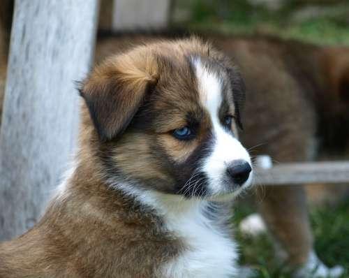 Puppy Young Dog Black Eye Cute Dog Pet