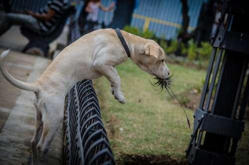 Puppy Dog Pet Cute Canine Domestic Animals Fun