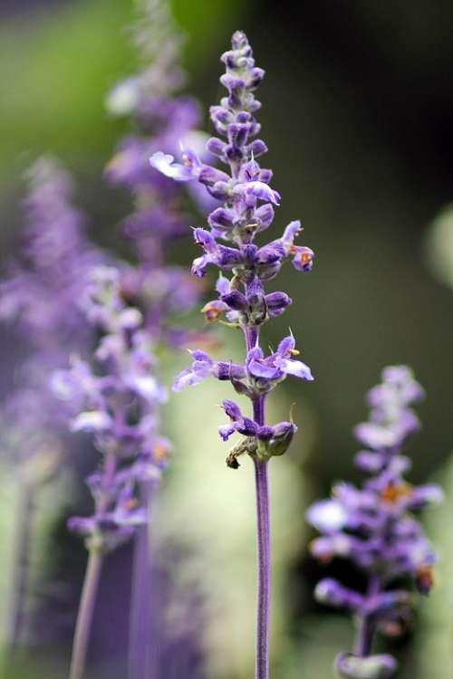 Purple Flower Plant Macro Nature Garden