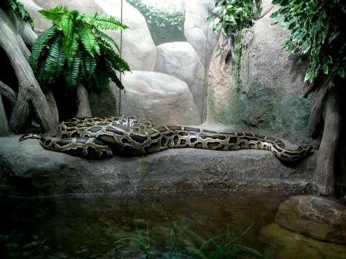 Python Boa Constrictor Snake Reptiles Zoo Animals