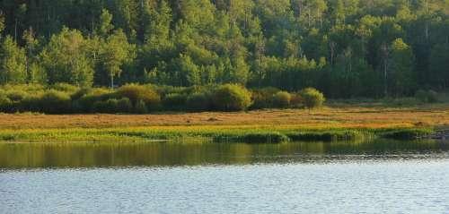 Quaken Asp Glade Nature Grass Meadow Field Outdoor