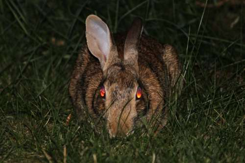 Rabbit Bunny Evil Demon Face Death Devil Fear
