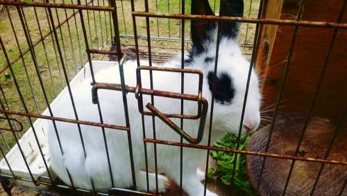 Rabbit Animal Cage