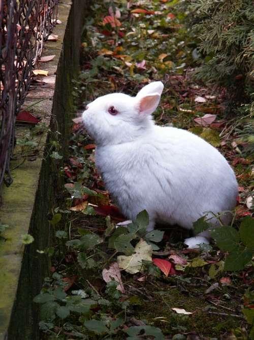Rabbit Animal Stunted On The Fence Autumn