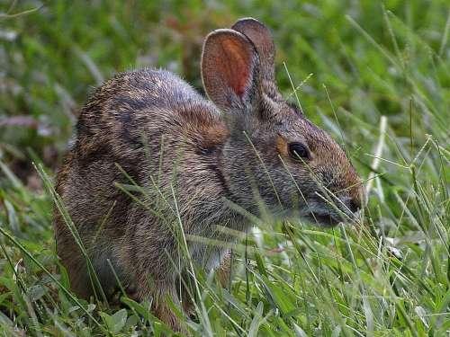 Rabbits Bunnies Rabbit Bunny Animals Fauna