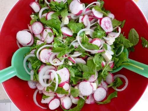 Radischen Salad Vegetables Biological Fresh Eat