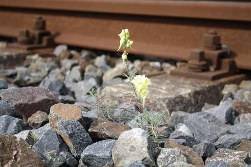 Railroad Track Railway Embankment Flower Plant