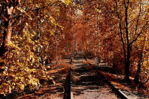 Rails Forest Autumn Colorful Trees Leaves