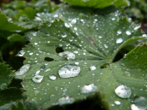 Rain Rain Drop Leaf Green Plant Nature