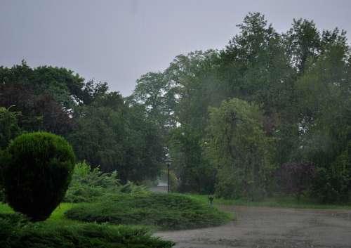 Rain Rainy Day Park Weather Nature Outdoor Green