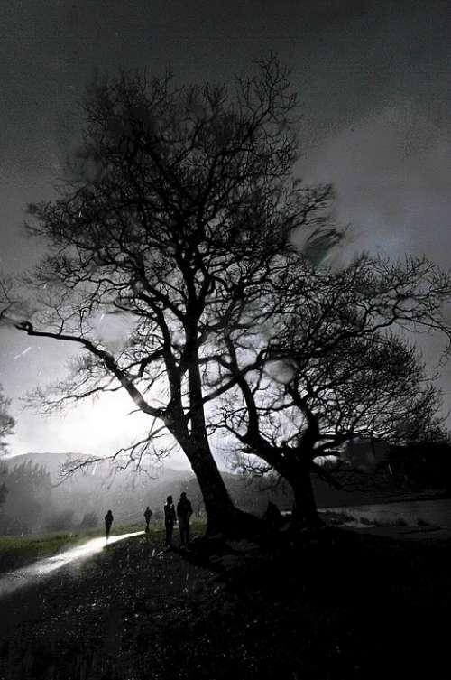 Rain Tree Cumbria Raindrops Weather Water Wet